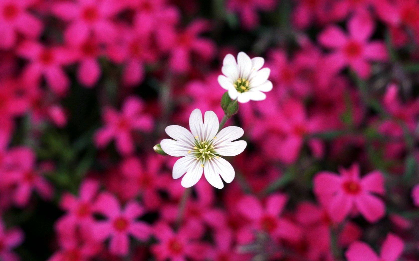 Flowers Wallpapers Desktop Group (93+)