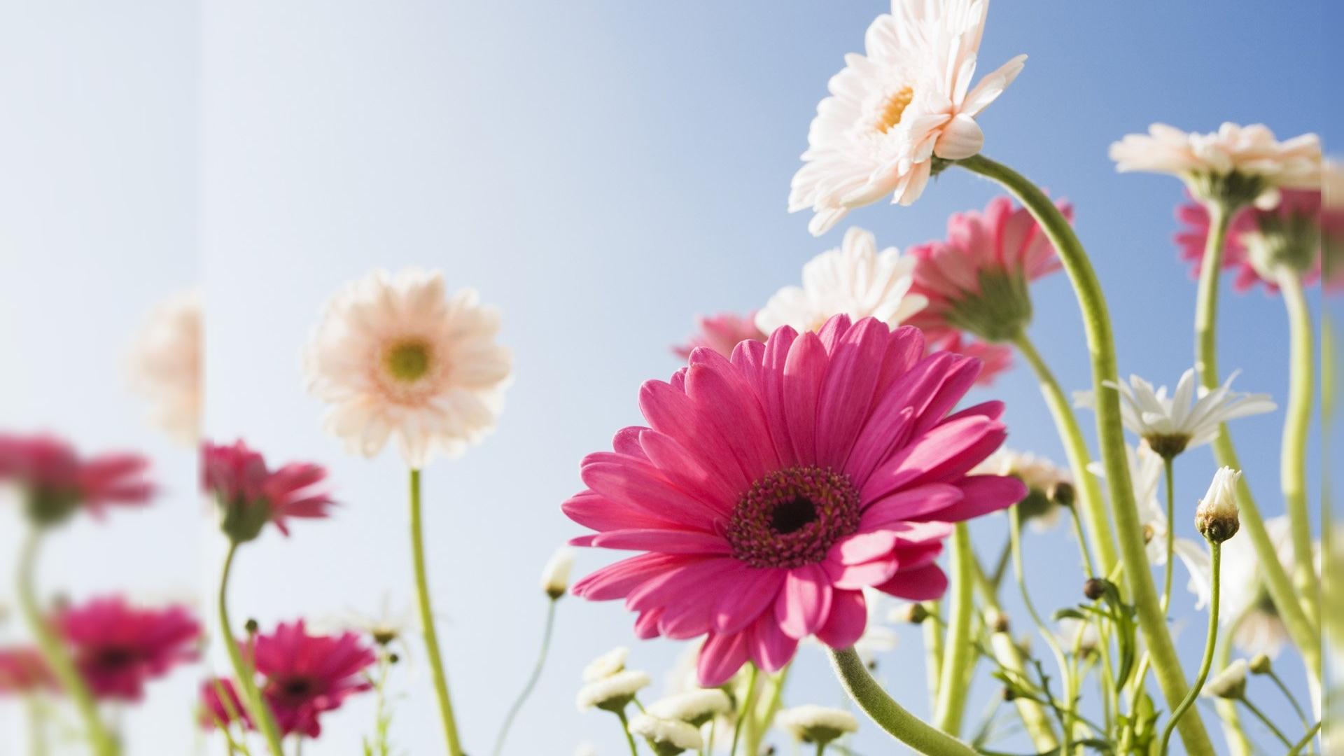 Desktop flowers clipart backgrounds - ClipartFox