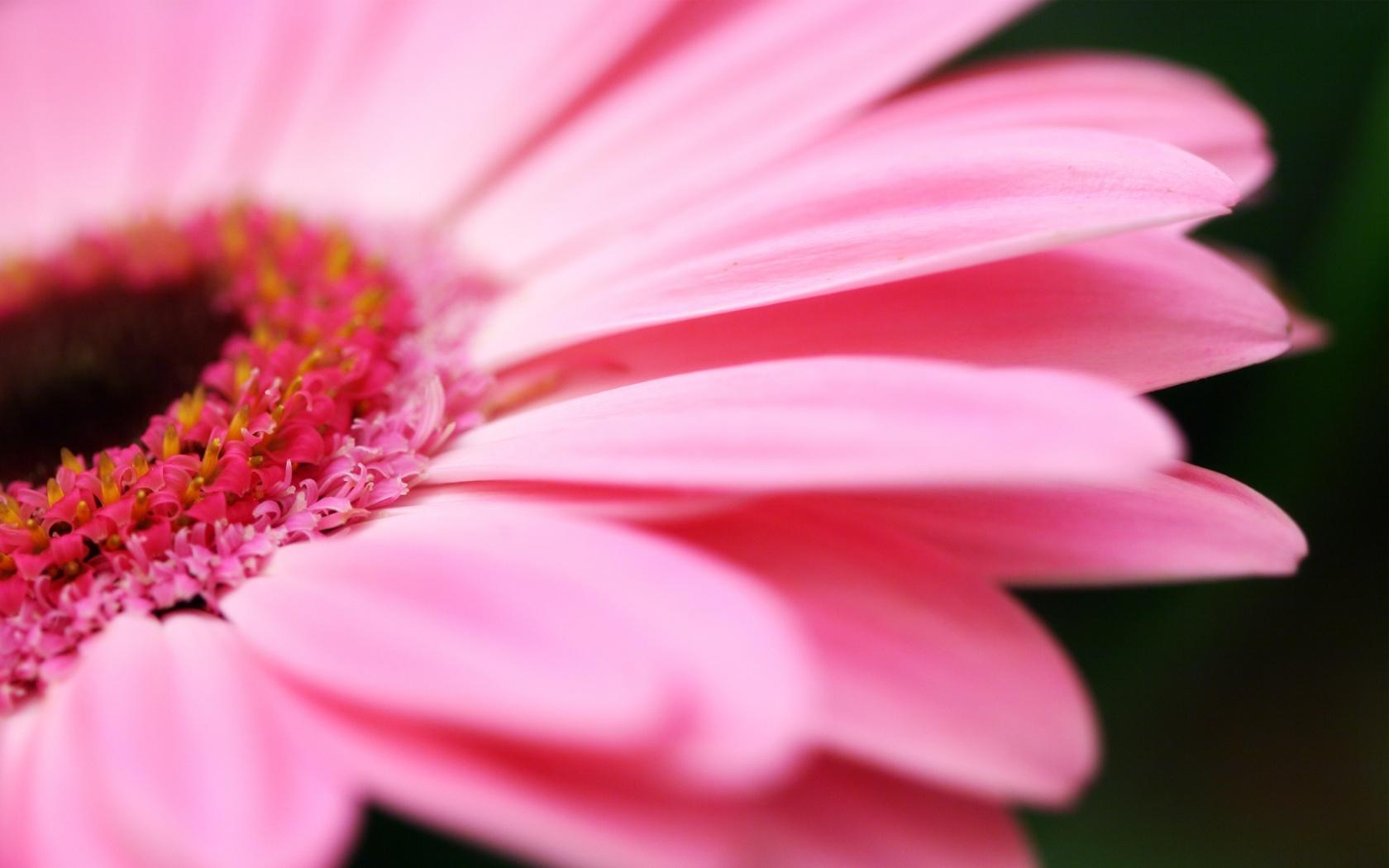 Desktop Flower Backgrounds Group (87+)