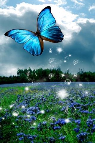 Download 3D Butterfly Live Wallpaper HD for android, 3D Butterfly
