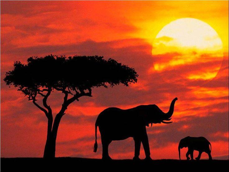 10+ ideas about Elephant Background on Pinterest   Happy art, Baby