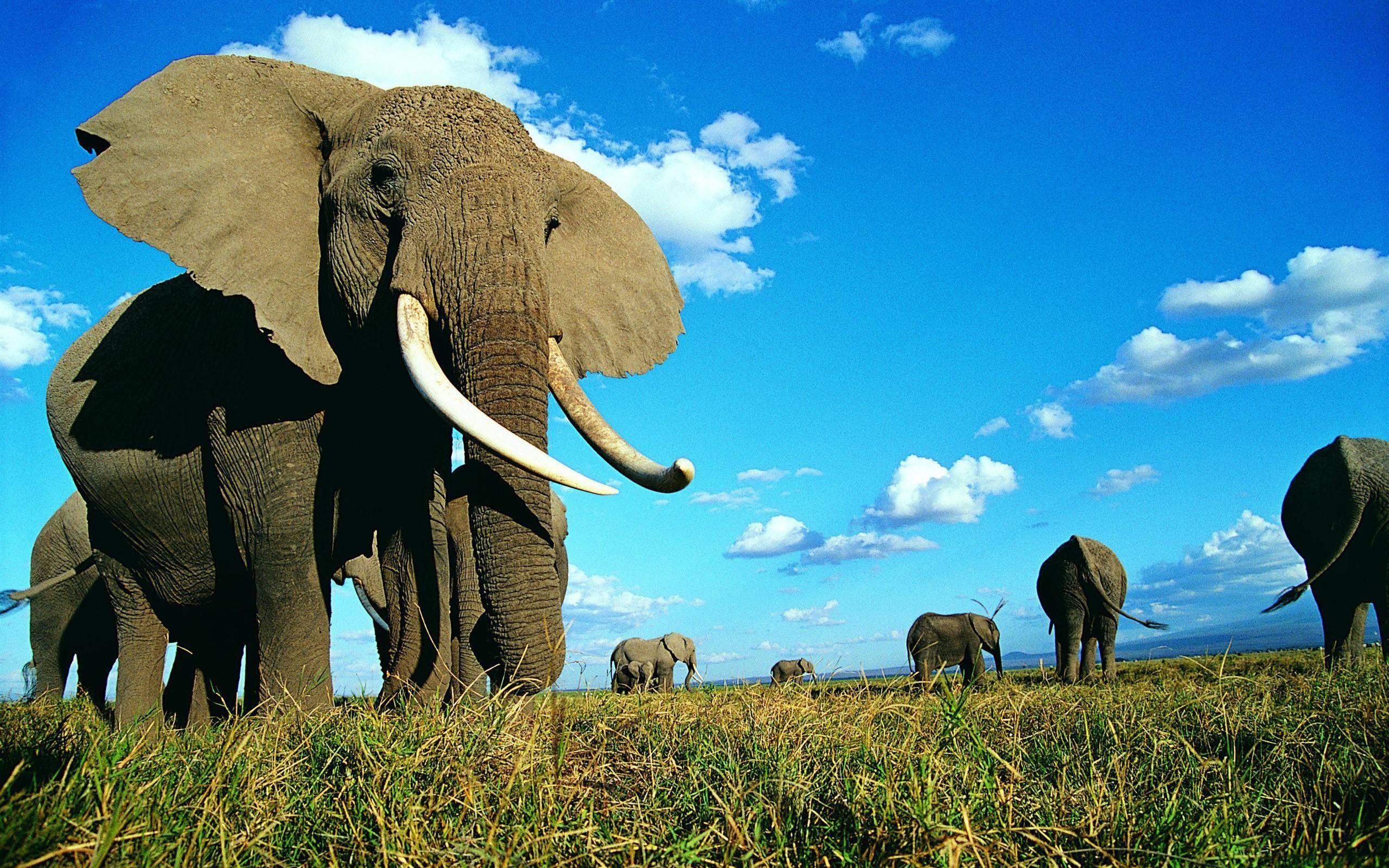 Elephants Background Page 1