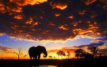 418 Elephant HD Wallpapers   Backgrounds - Wallpaper Abyss