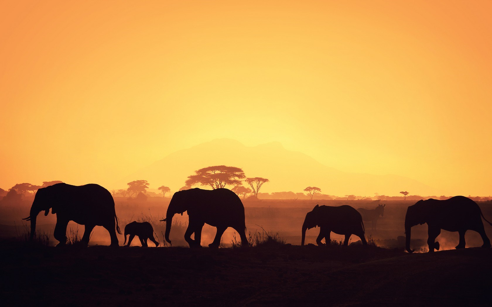 Collection of Elephants Background on HDWallpapers