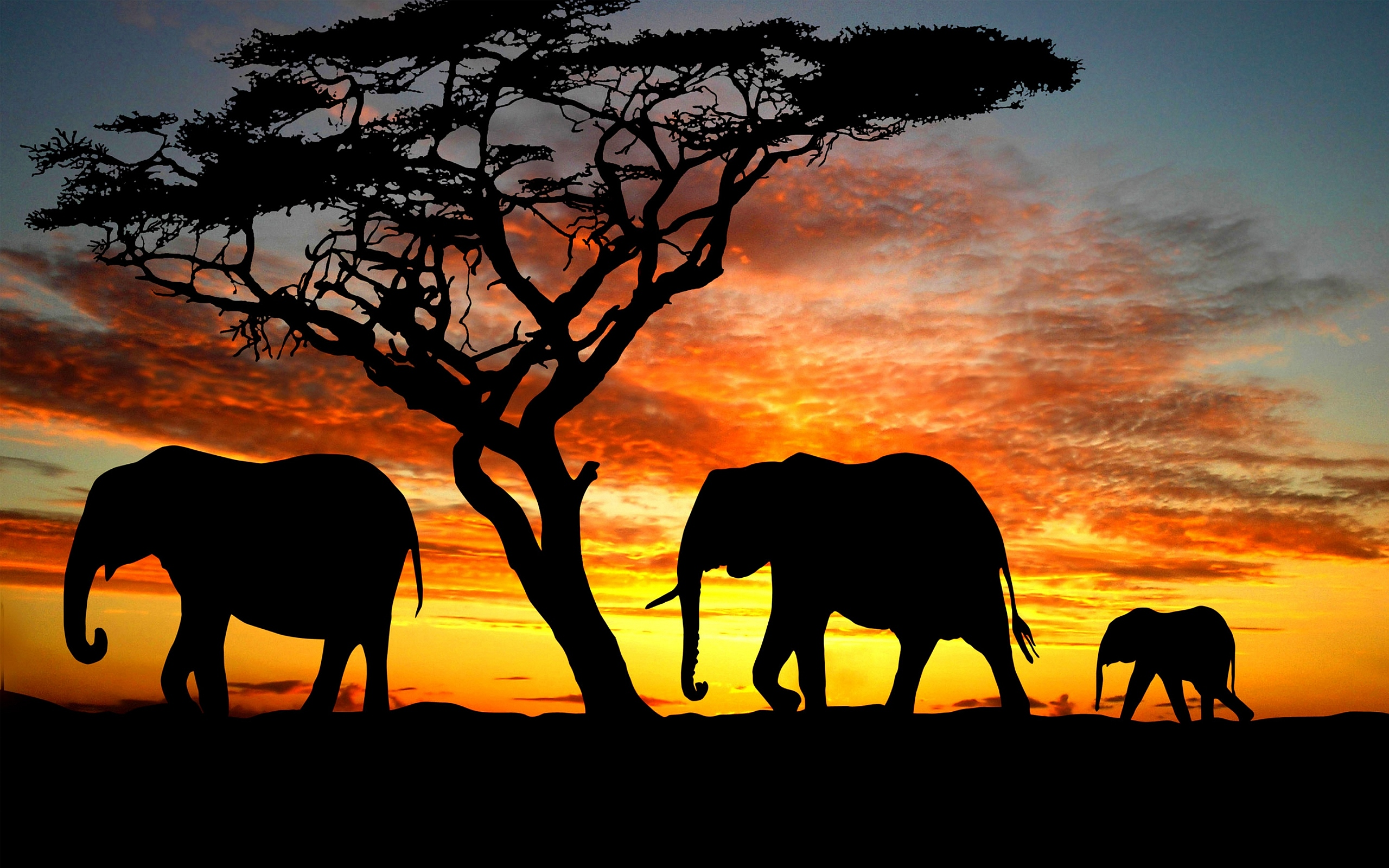1000+ images about Elephants on Pinterest   Artsy, iPhone