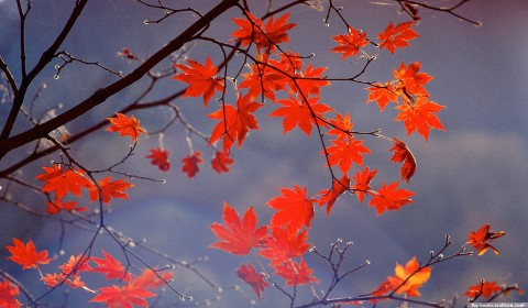 Autumn Desktop Wallpapers Widescreen - WallpaperPulse