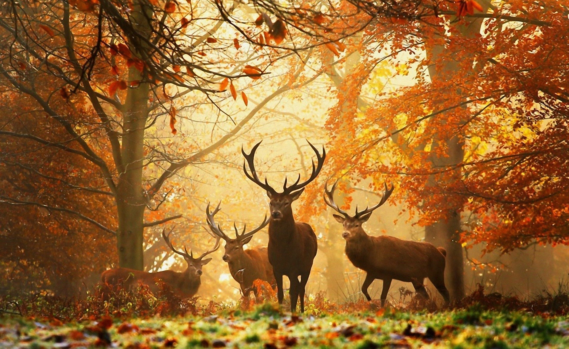 Fall with Animal Android HD Wallpapers 4025 - Amazing Wallpaperz