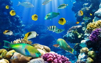 490 Fish HD Wallpapers | Backgrounds - Wallpaper Abyss