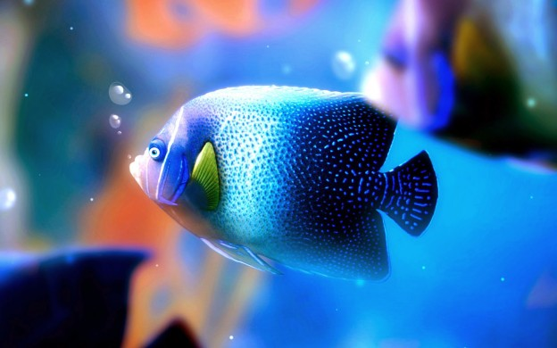 Beautiful Fish Wallpapers HD Pictures – One HD Wallpaper Pictures
