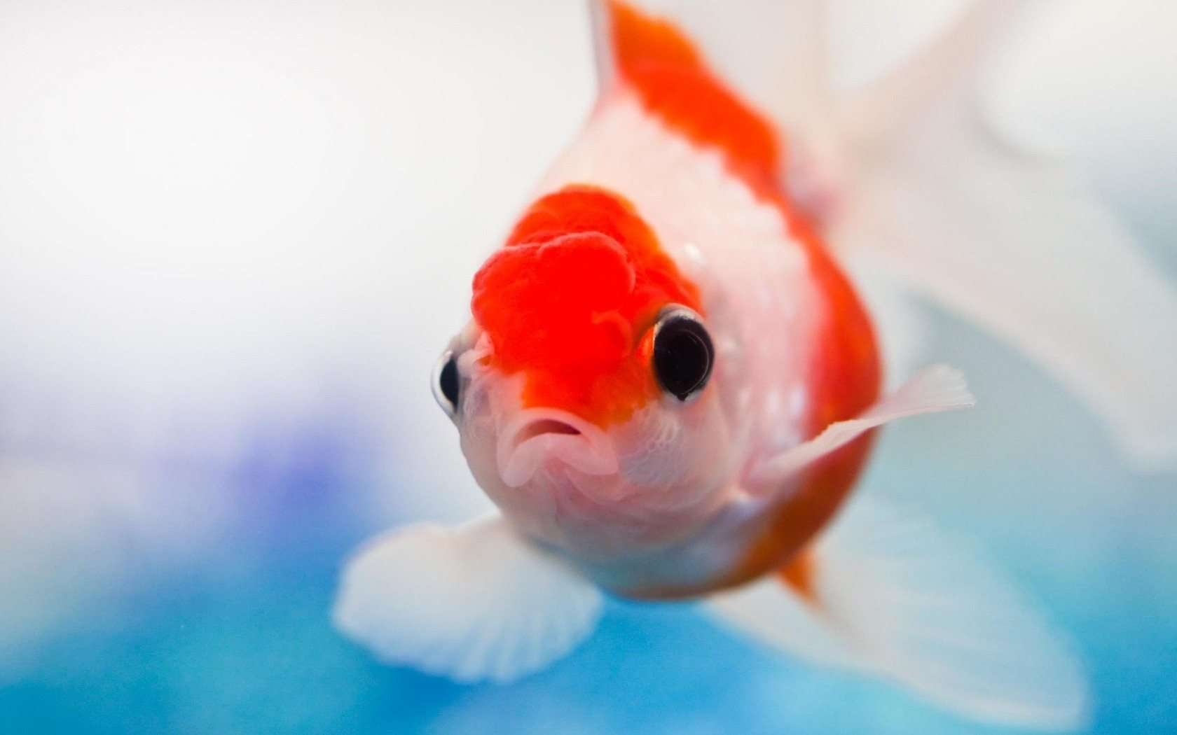 Fish Wallpaper HD Group (56+)