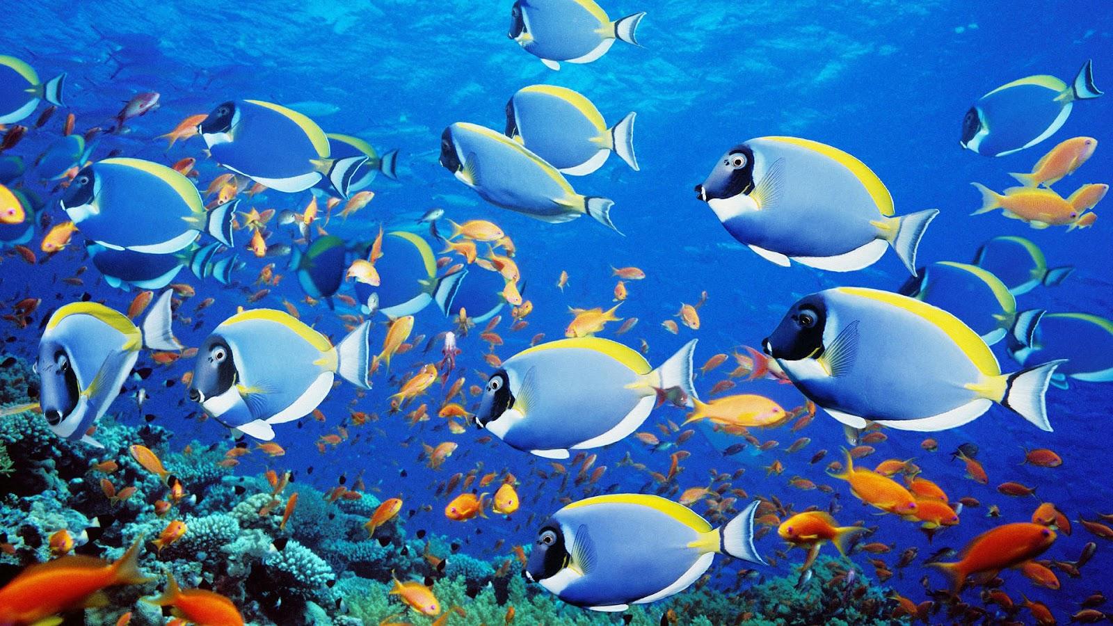Beautiful Fish Wallpapers Free Download - HD Wallpapers Pop