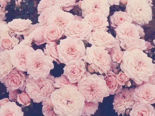 Tumblr Flowers   tumblr hintergruende tumblr backgrounds flower