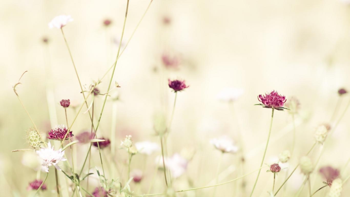 Flower Wallpaper Tumblr Sf Wallpaper