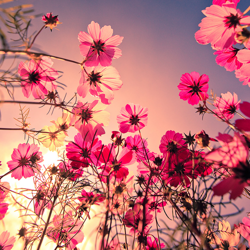 Image for Vintage Flowers Tumblr HD Wallpapers   things
