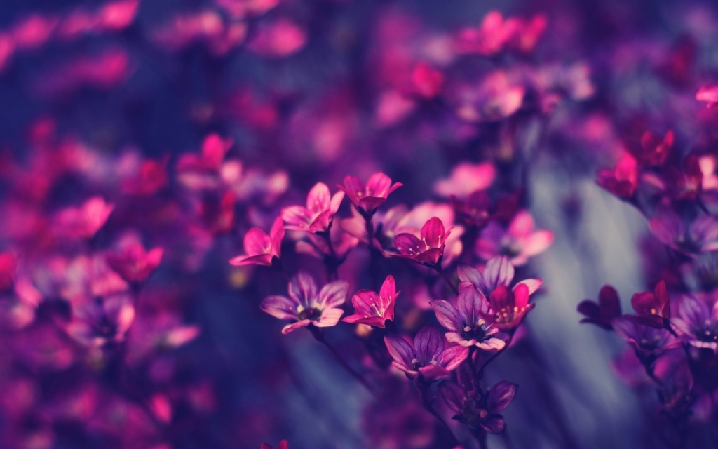 Collection of Flower Wallpapers Tumblr on HDWallpapers