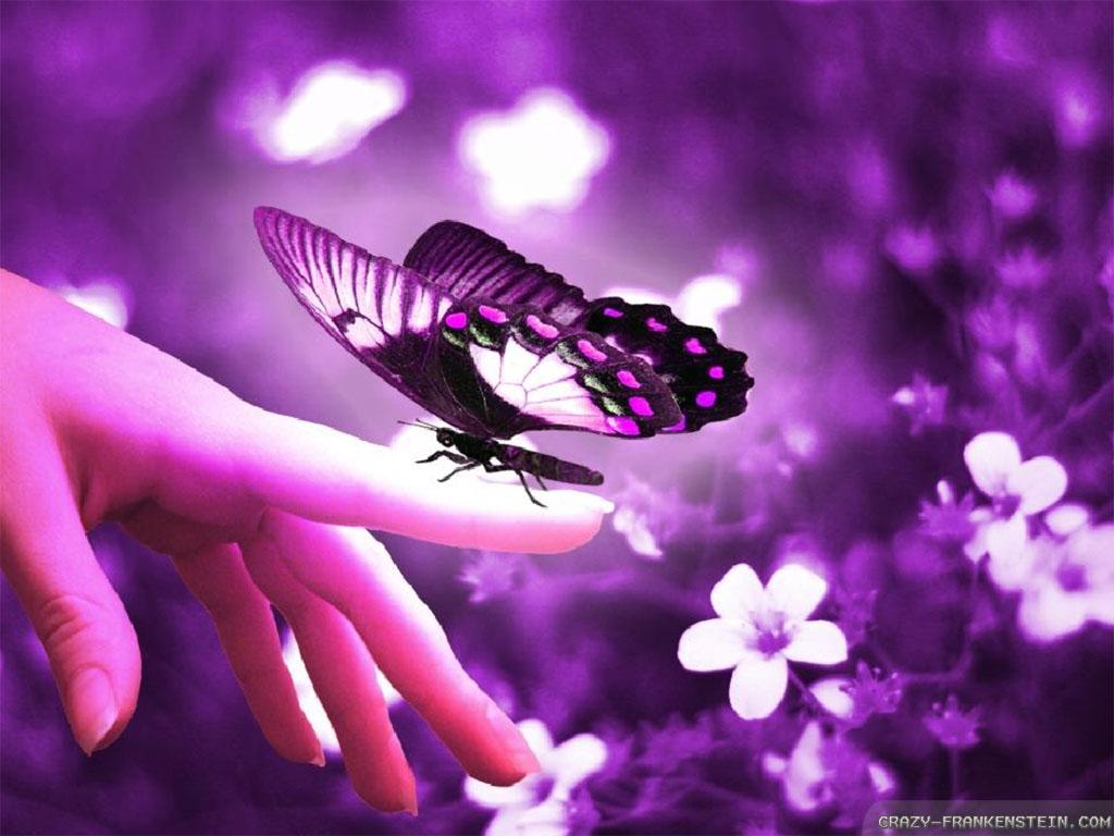 Download Beautiful Flowers And Butterflies Wallpaper 1024x768