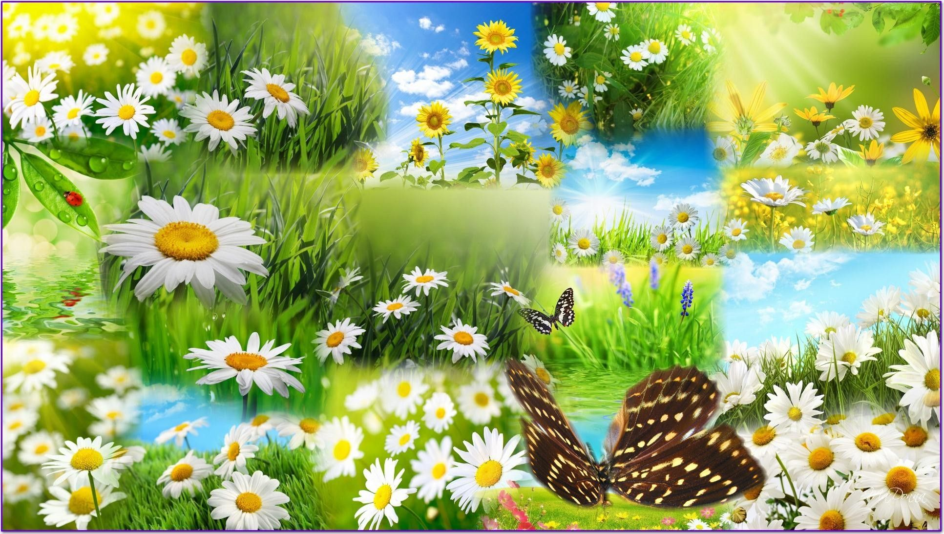 Flowers and Butterflies Spring Wallpapers - HD Wallpapers Pop