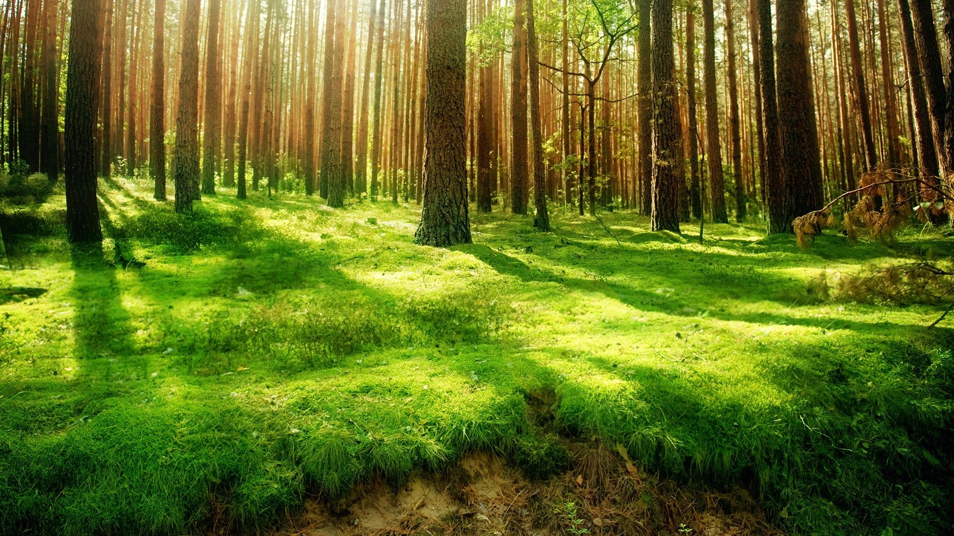 forest hd background
