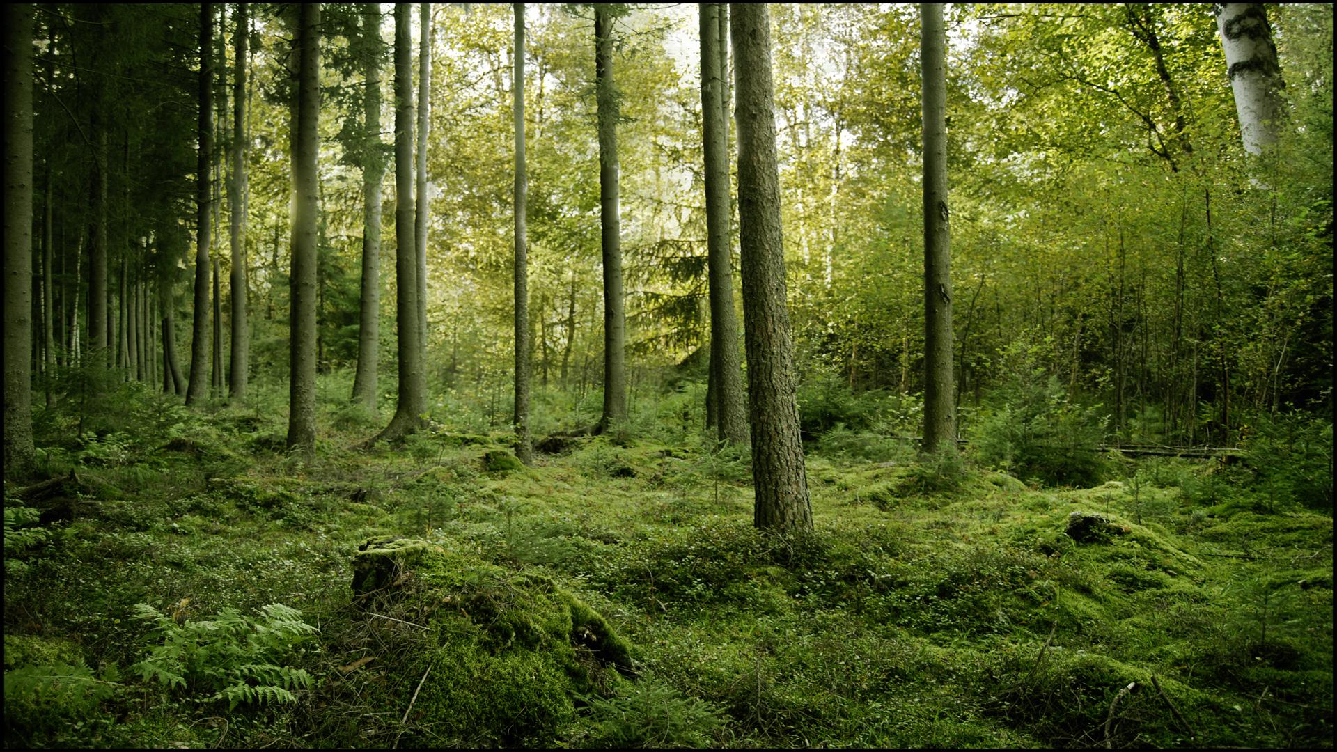 картинки на обои рабочего стола лес мальту целью
