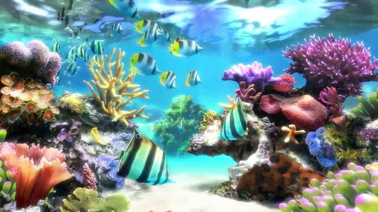 Sim Aquarium - Screensaver & Live Wallpaper - YouTube