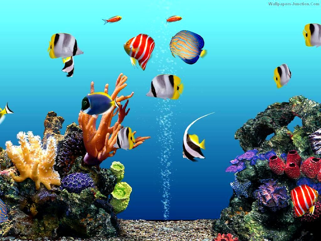 Collection of Free Aquarium Wallpaper on HDWallpapers