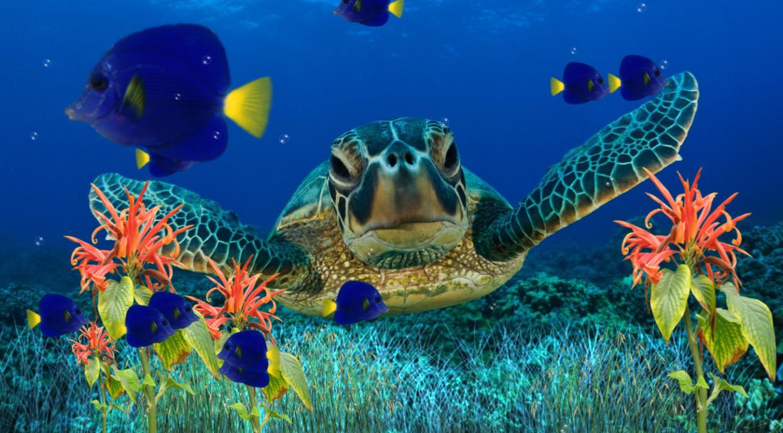 Free Live Fish Aquarium Wallpaper - WallpaperSafari