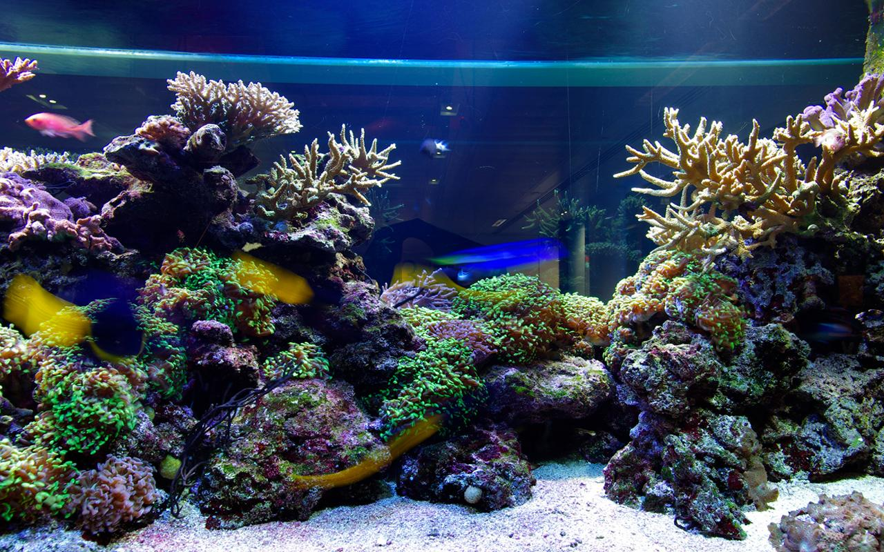 Aquarium Live Wallpaper - Android Apps on Google Play