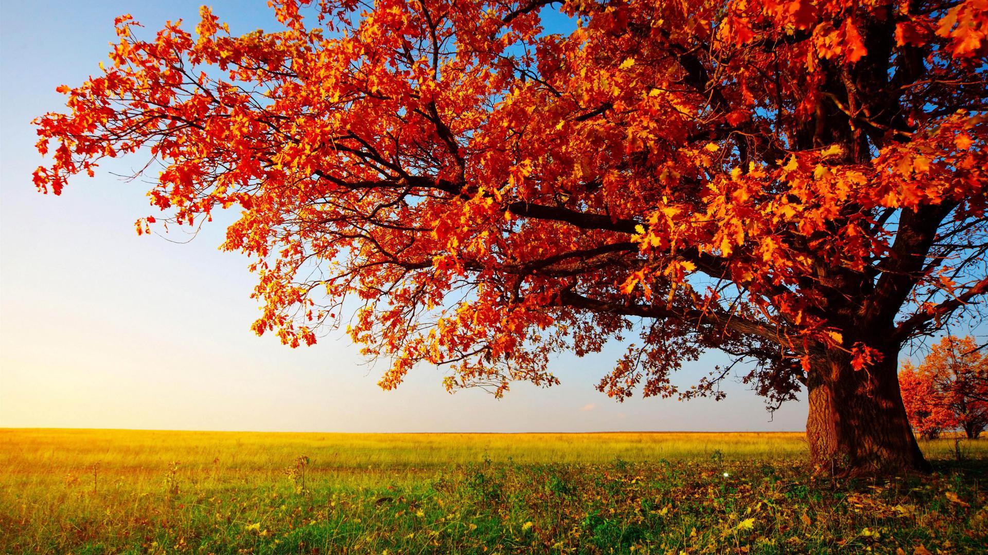 Free Fall Desktop Wallpaper Widescreen