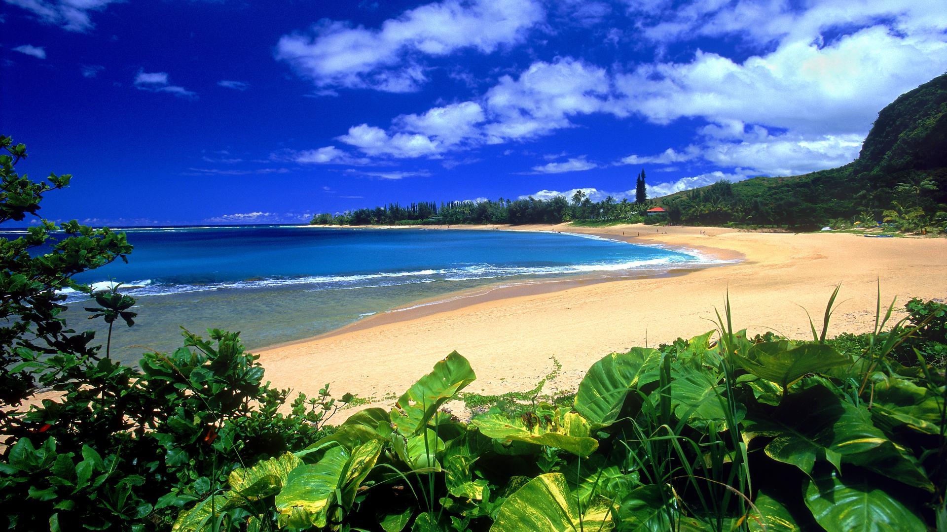 Free Hawaii Wallpapers Group (74+)