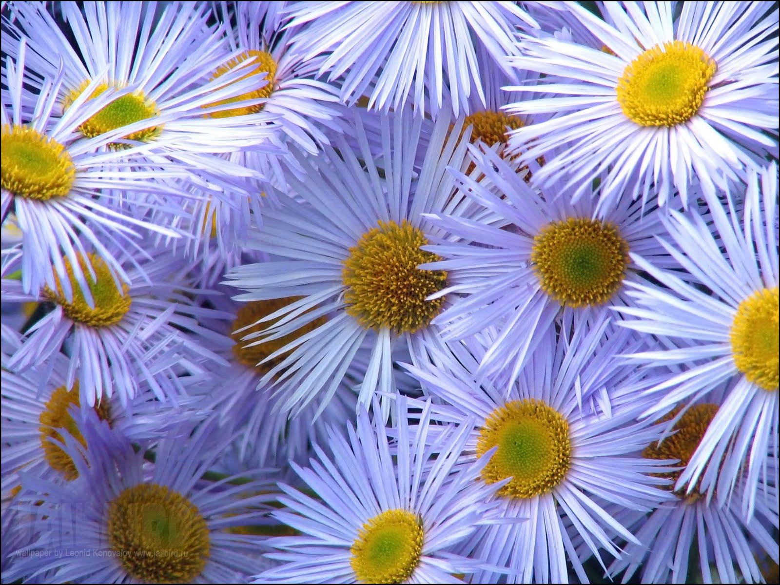 Free Desktop Wallpaper Flower Scenes - WallpaperSafari