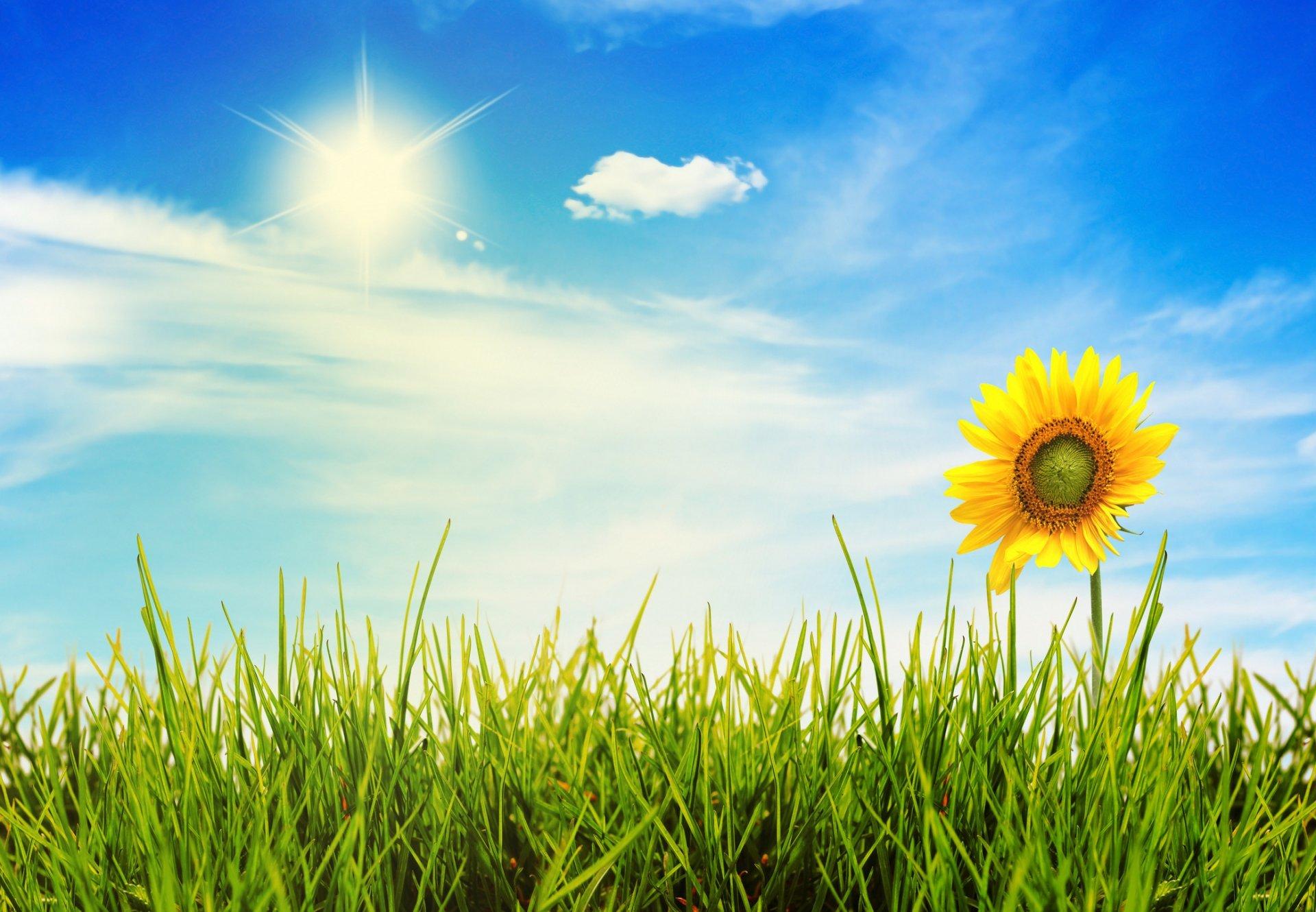 nature flower landscape grass sky sun light HD wallpaper