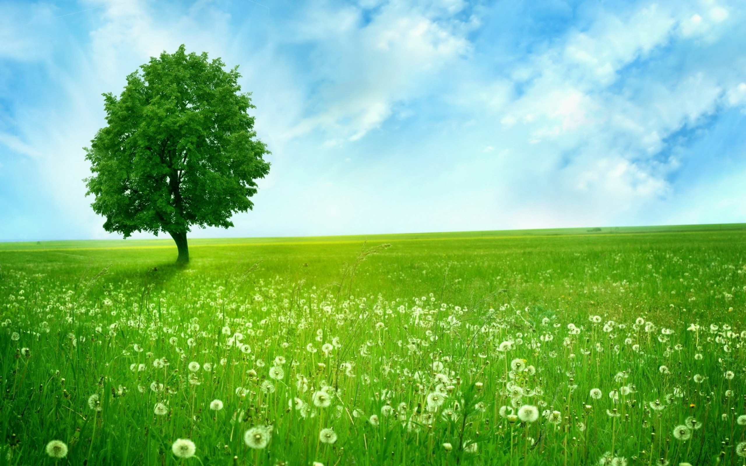 Natural Wood Meadow Grass Sky Hd Wallpaper : Wallpapers13 com