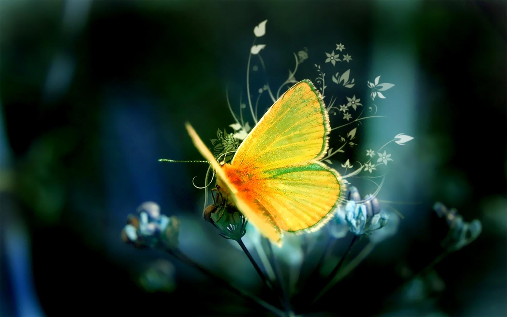 1680x1050px Butterfly Hd Wallpaper Com | #394310
