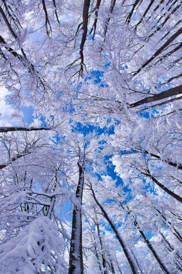 если картинки обоев зима для айфона украине