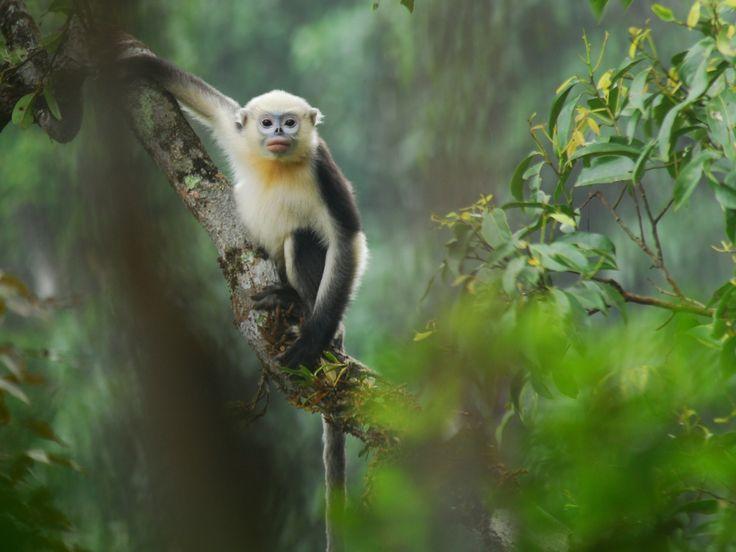 1000+ ideas about Monkey Wallpaper on Pinterest | Arctic monkeys