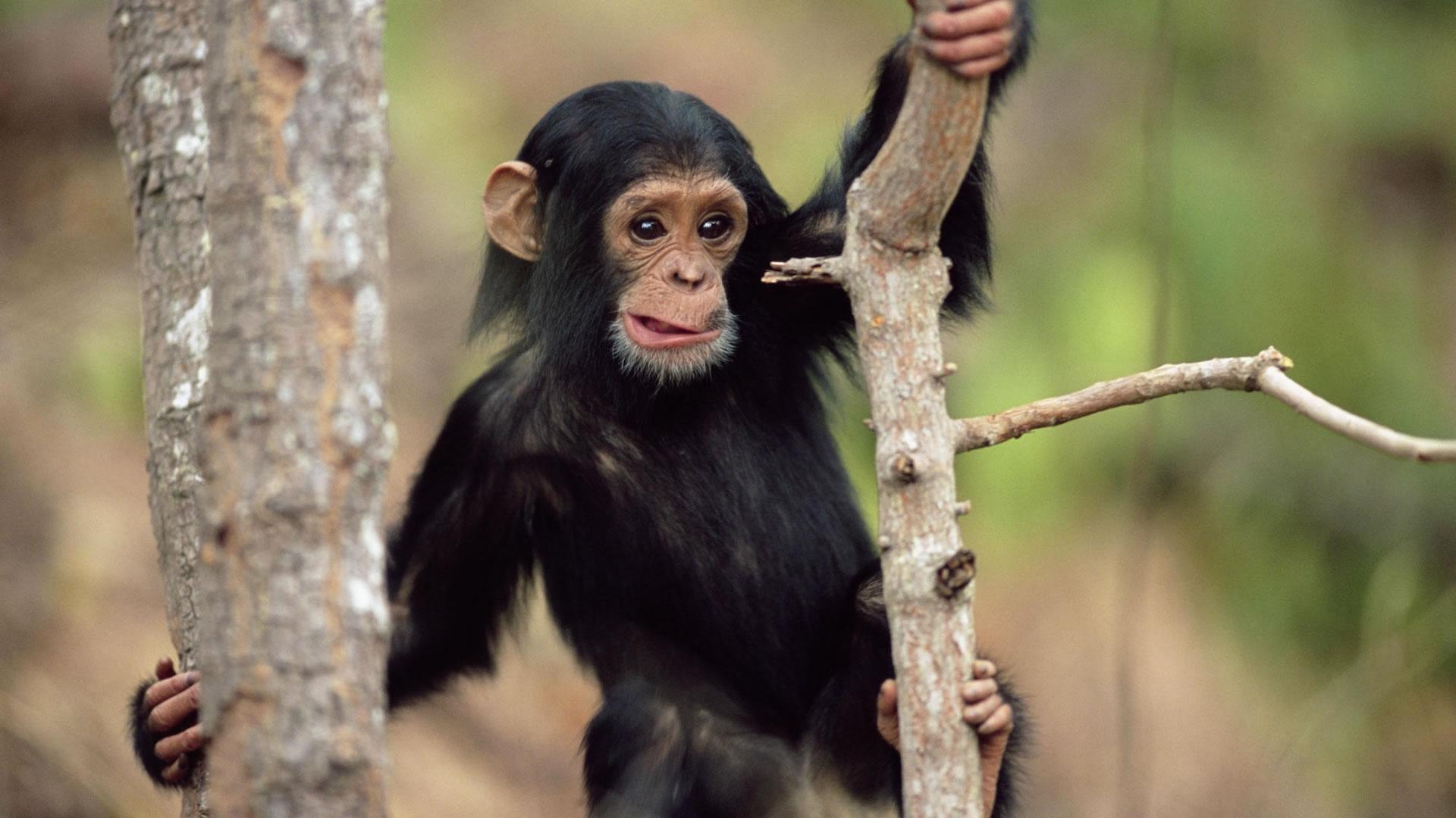 Download Baby Monkey Wallpaper | Full HD Wallpapers