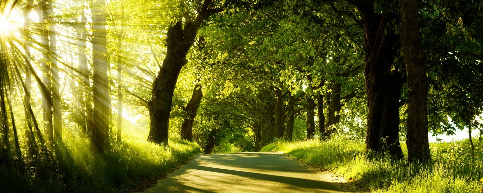 My Best Wallpapers: beautiful pictures of green nature, natural