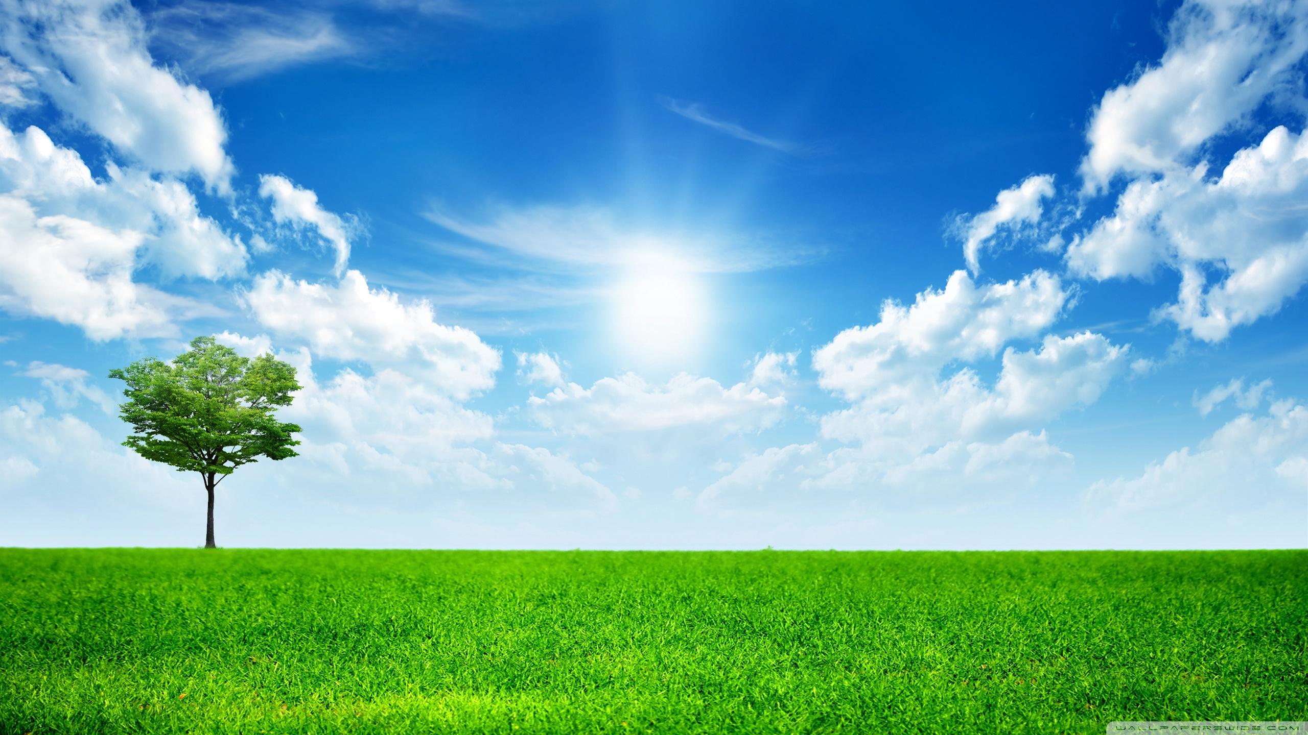 Green Nature HD desktop wallpaper : Mobile : Dual Monitor
