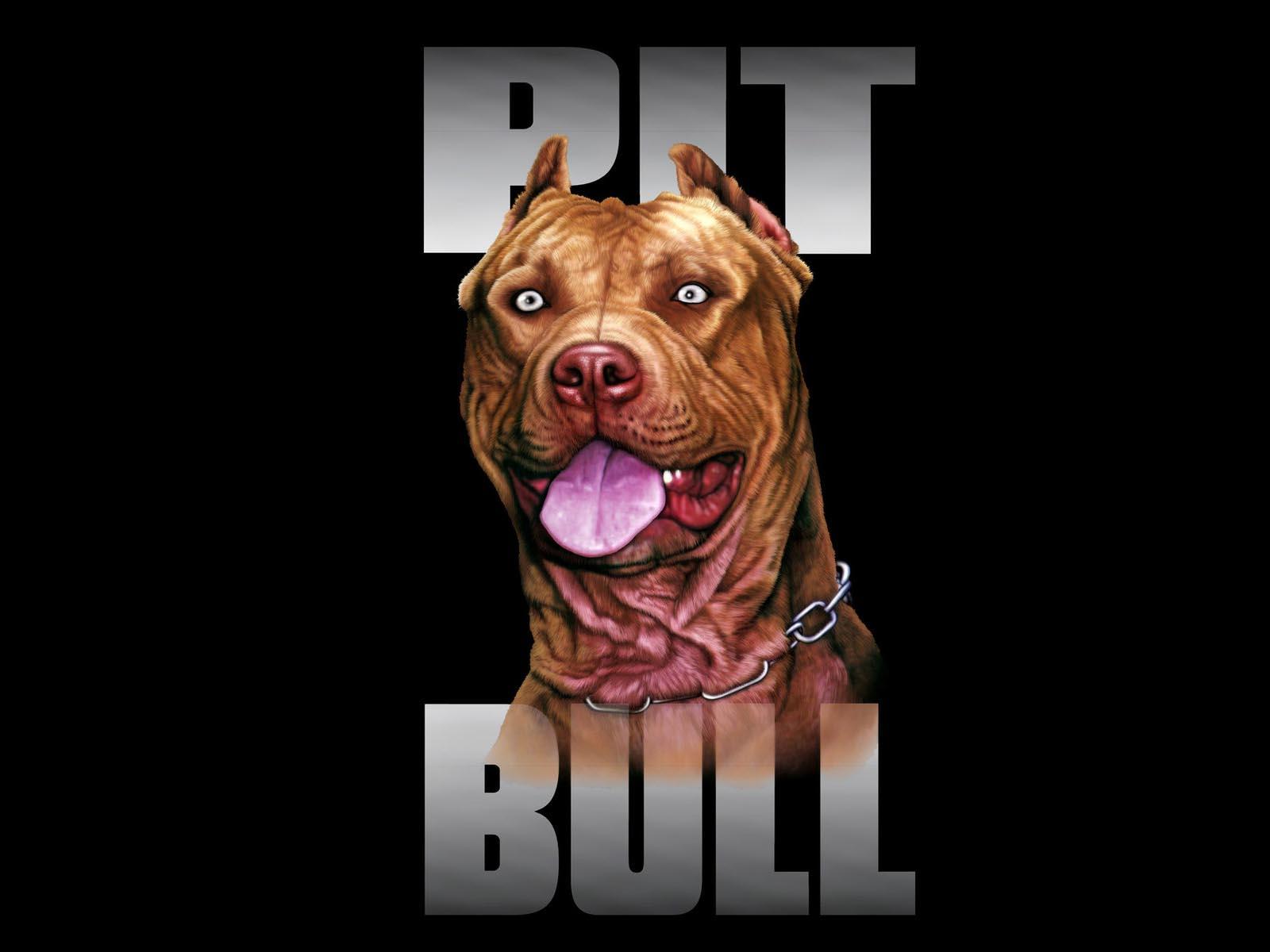 Pitbull Wallpaper HD - WallpaperSafari