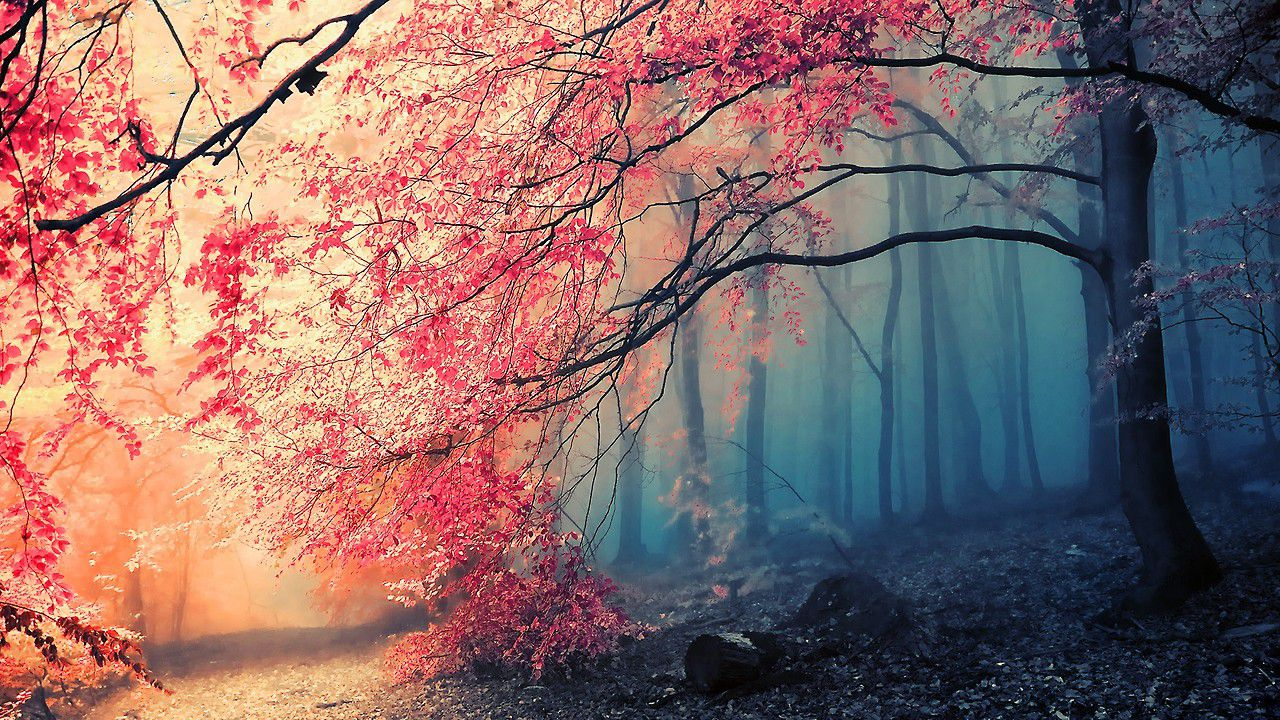 35+ Pretty Backgrounds, Pretty HDQ Photos, Free Download Pack V 175-GM