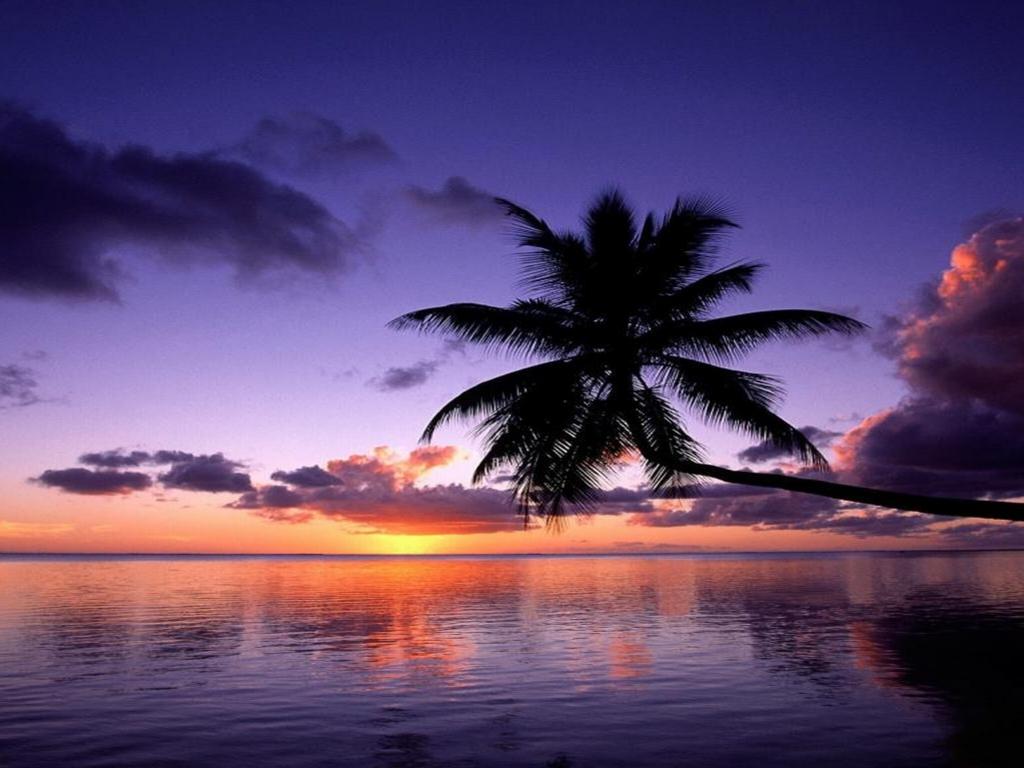 Purple Sunset Wallpaper - WallpaperSafari