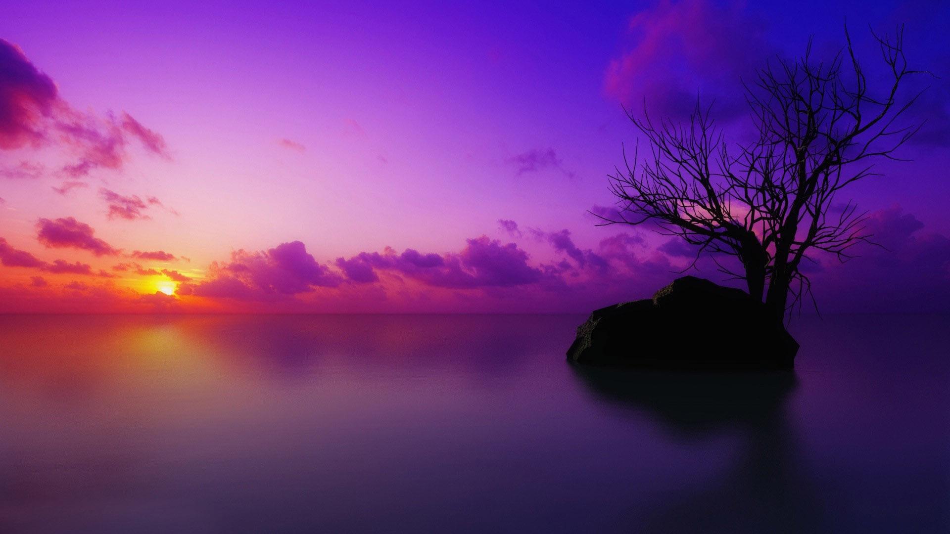 Purple Beach Wallpaper - WallpaperSafari