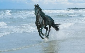1156 Horse HD Wallpapers   Backgrounds - Wallpaper Abyss