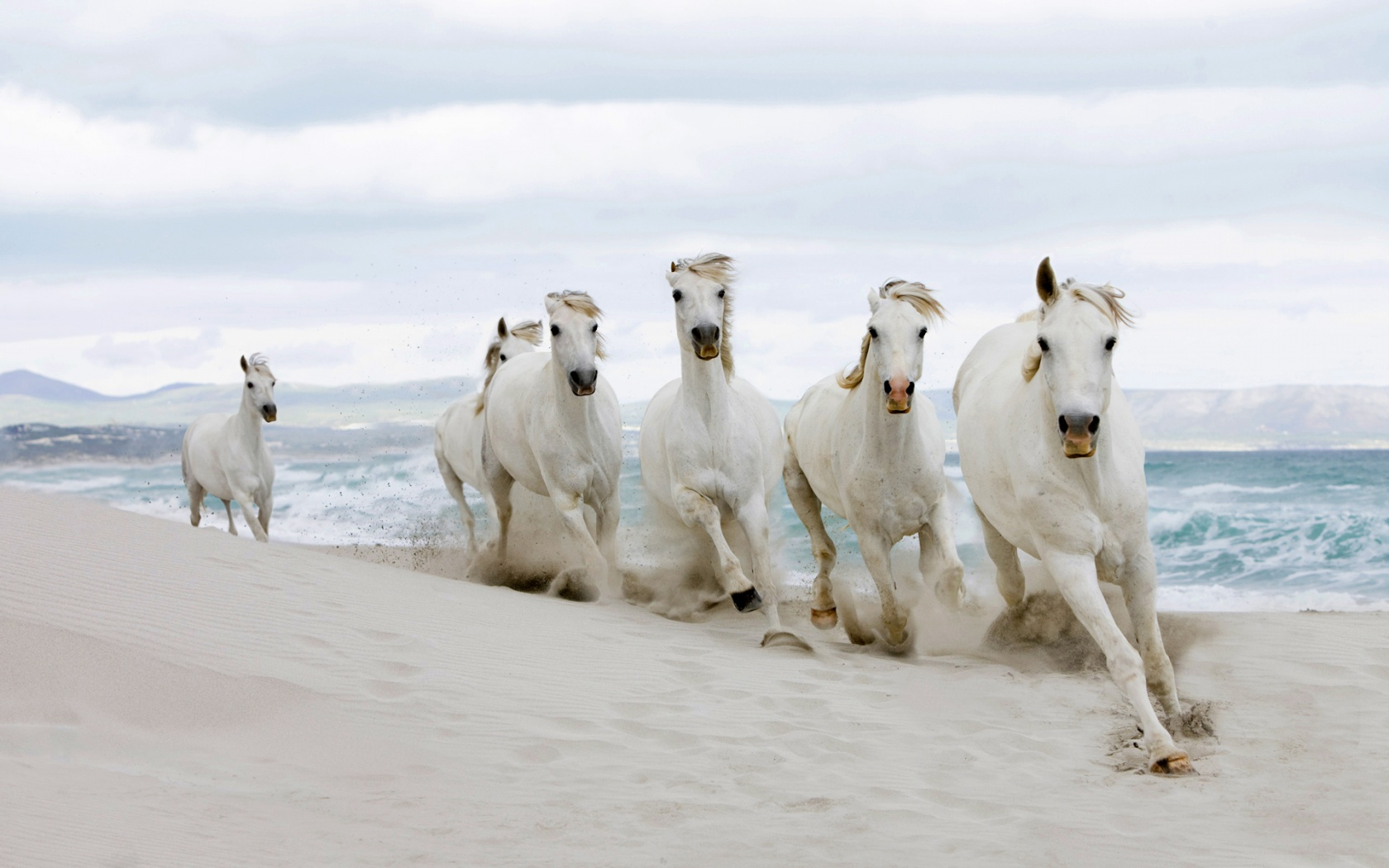 Keywords Seven Running Horses Wallpaper and Tags