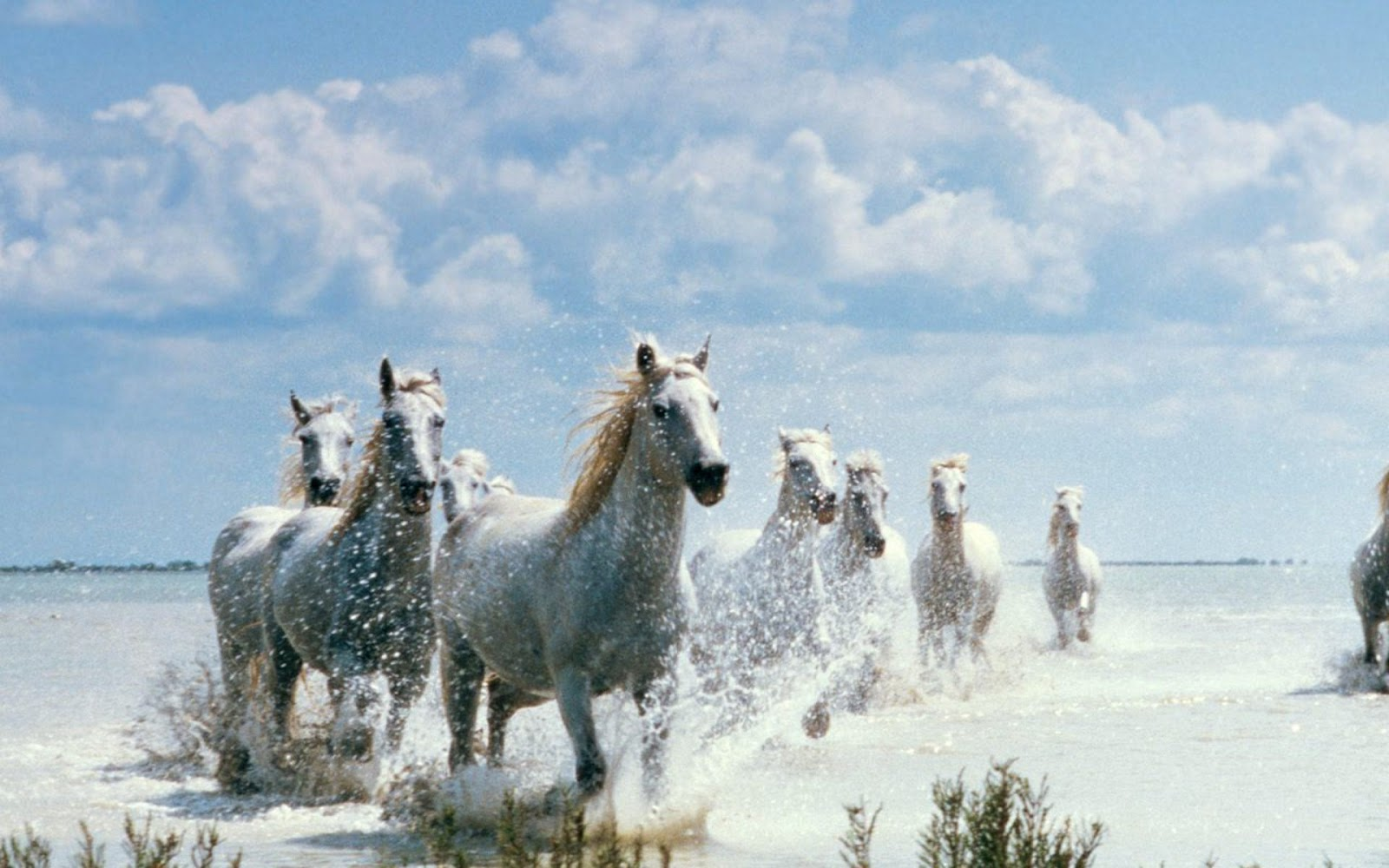 HD Wallpapers: beautiful desktop wallpapers animals  beautiful