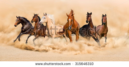 Horses Running Stock Images, Royalty-Free Images & Vectors