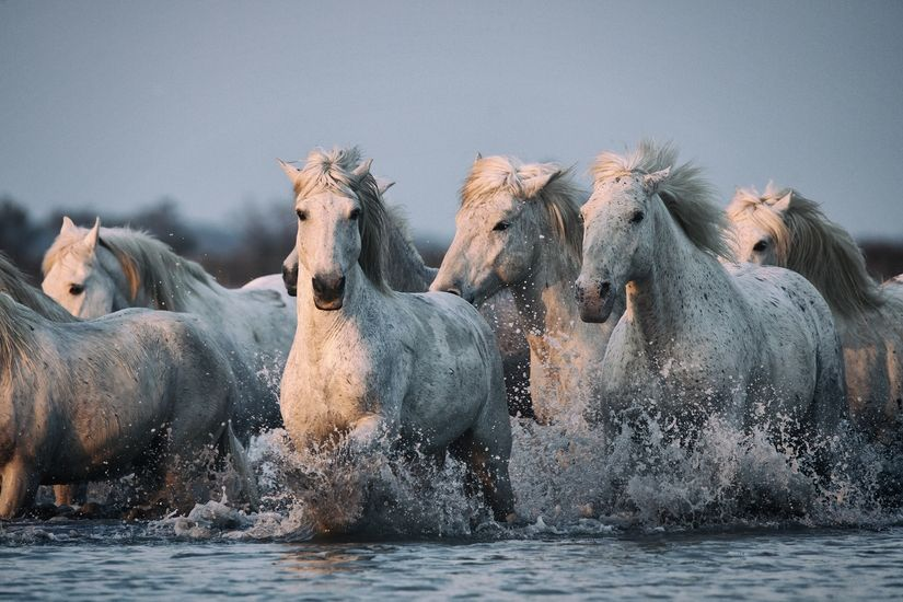 Seven Horse Wallpapers Group (53+)