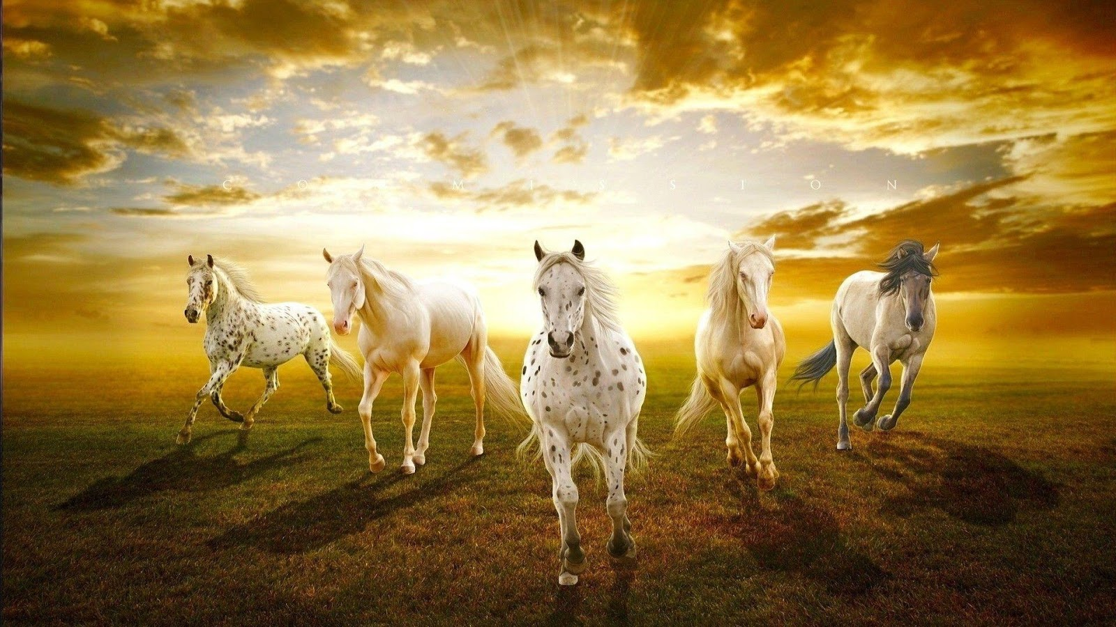 Seven Horses Wallpaper 7 - Android Apps on Google Play