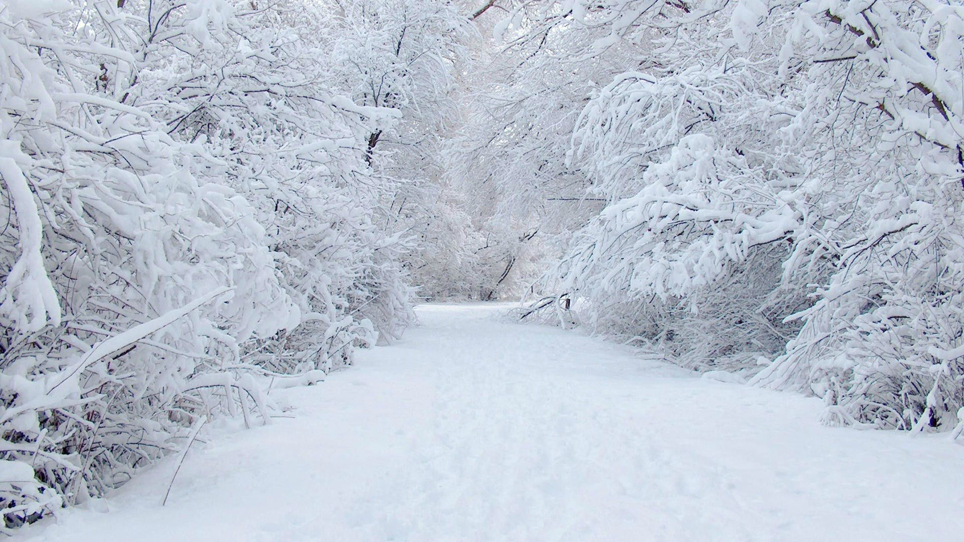 Snow Wallpapers HD - Wallpaper Cave