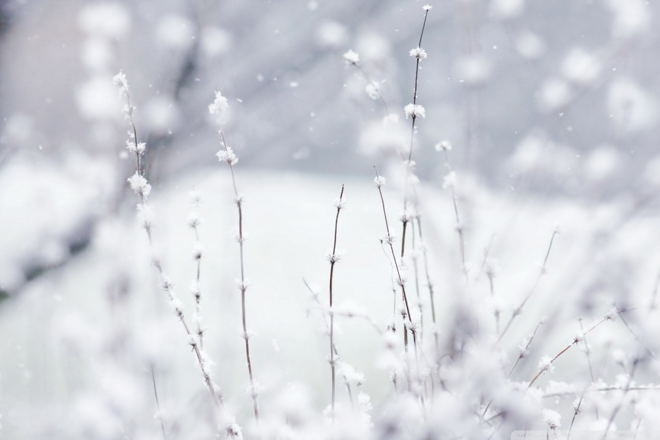 Snow HD desktop wallpaper : High Definition : Fullscreen : Mobile